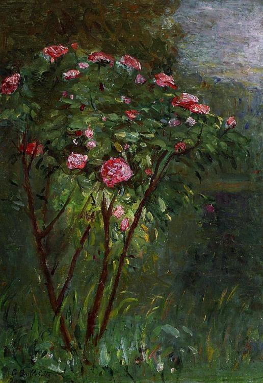 1884 rosier