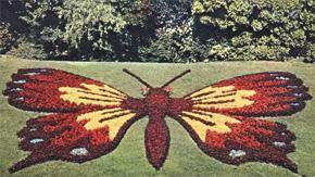 Cambrai ville fleurie papillon mosaique