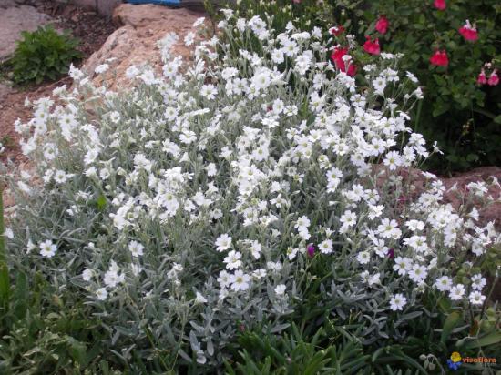 corbeille-d-argent-visoflora-28981.jpg