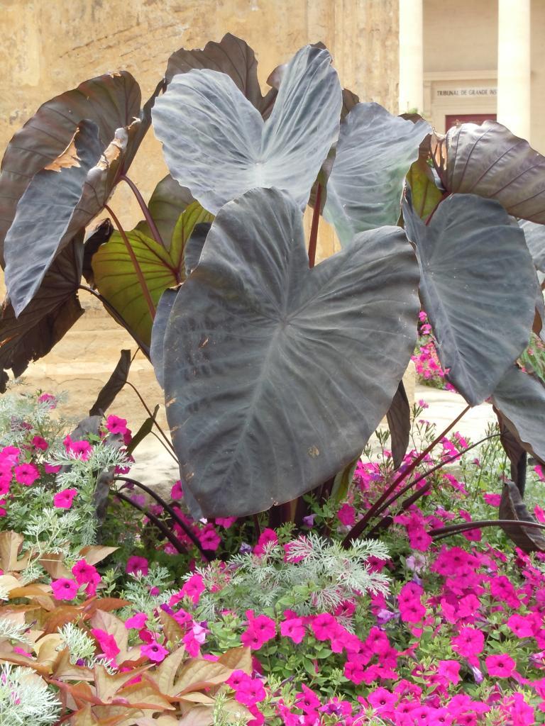 Jardin chocolat liste des plantes for Grande plante verte exterieur
