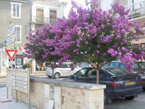 Lagerstroemia - Arbre lilas des indes ...