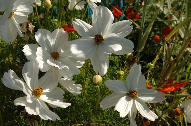 Fleurissement 028