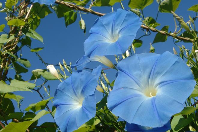 Fleurissement 169