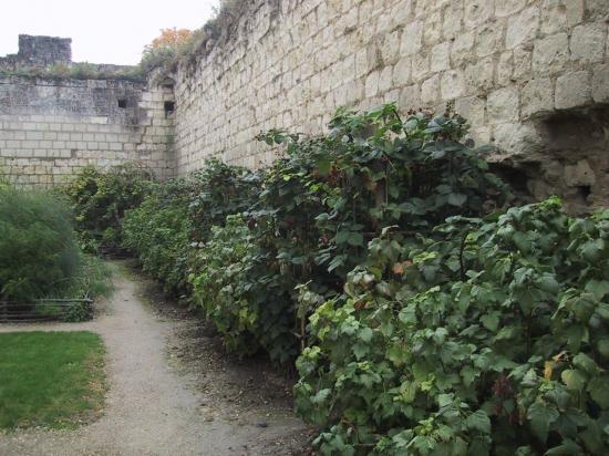 jardins-medievaux-012.jpg