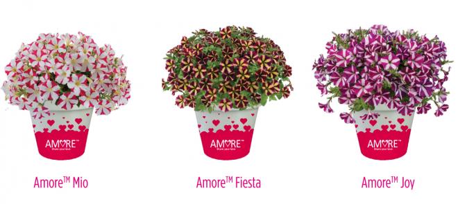 Petunia amore branding photo danziger