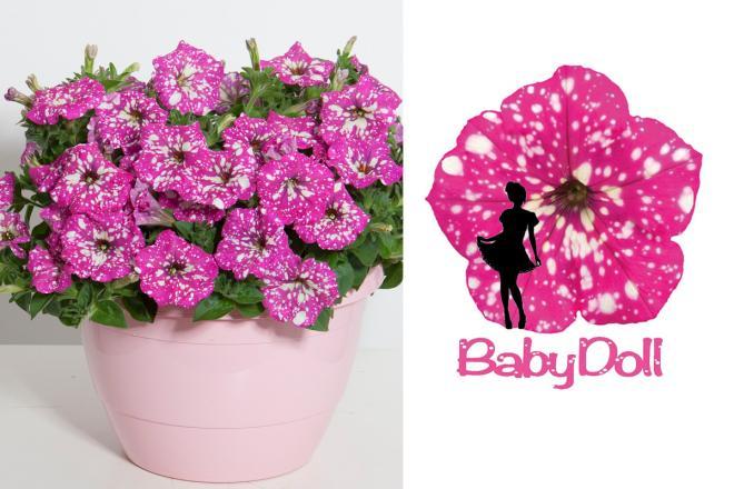 Petunia baby dole 2