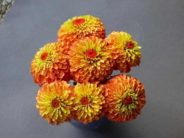 Zinnia queeny lime orange 2